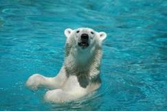 <あべのキューズモールスマイルプロジェクト第31弾>  天王寺動物園とのコラボレーション企画 『